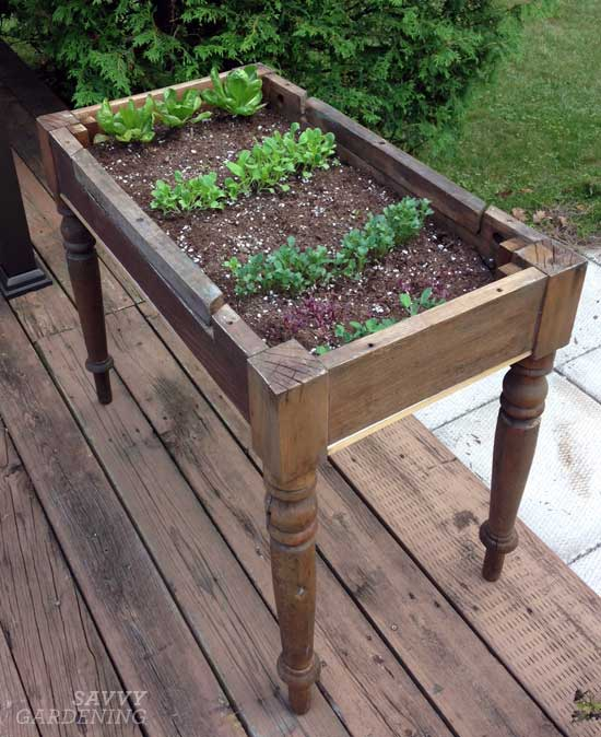 lettuce-table-top