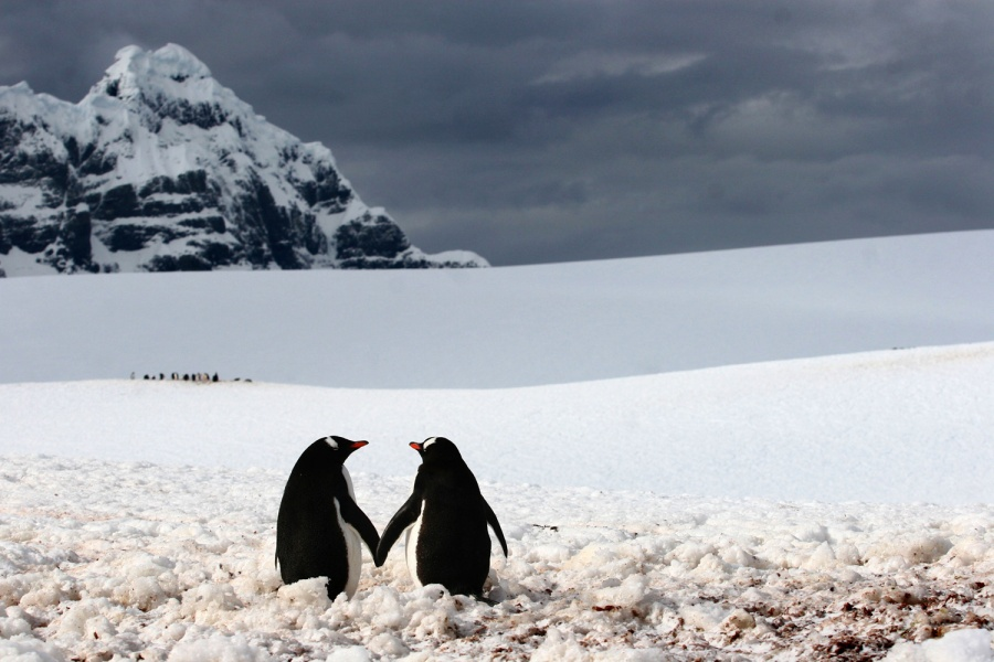 1002705-900-1449753517-AT-111213-penguins-holding-hands-whalen
